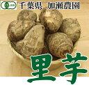 里芋 サイズ混合10kg(千葉県 加瀬農園)有機JAS無農薬野菜・送料無料・産地直送