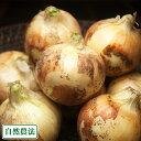 新玉ねぎ 約10kg 自然農法 (沖縄県 大宜味農場) 産地直送