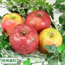 青森健康りんご2色セット 訳あり10kg箱(青森県 田村りんご農園 )特別栽培 減農薬 りんご 送料無料 産地直送