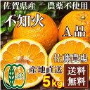 不知火(シラヌイ) A品5kg(佐賀県 佐藤農場株式会社)デコポンと同品種・無農薬柑橘・送料無料・産地直送