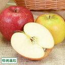 青森りんご2色セット A品5kg箱 特別栽培 (青森県 田村りんご農園) 産地直送