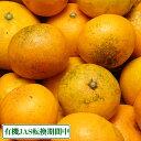 [限定セール] 有機 温州みかん B品5kg(佐賀県 佐藤農場)無農薬柑橘・送料無料・産地直送