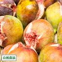 【クール冷蔵便】イチジク蓬莱柿 300g×3パック 自然農法 (広島県 万汐農園) 産地直送