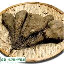 短形自然薯(土付き) 3kg(青森県 須藤農園)自然栽培 無農薬じねんじょ・産地直送・送料無料・無化学肥料
