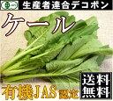 [クール便無料]有機JAS ケール 30g×5袋(千葉県 生産者連合デコポン)無農薬野菜・送料無料・産地直送 P20Aug16