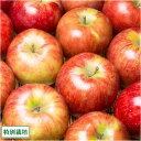 早生りんご(赤) 家庭用10kg箱(28〜46玉) 特別栽培 (青森県 田村りんご農園) 産地直送