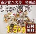海風しいたけ 特選品 1.5kg(東京都 大竜ファーム)八丈島野菜・無農薬・無化学肥料・産地直送・送料無料