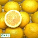 広島レモン A品3kg(広島県 セーフティーフルーツ)農薬、化学肥料不使用・ノーワックス・送料無料・産地直送
