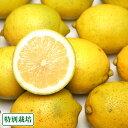 広島レモン 訳あり5kg(広島県 セーフティーフルーツ)農薬、化学肥料不使用・ノーワックス・送料無料・産地直送