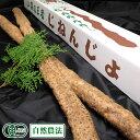 有機 自然薯 『特選』贈答用 約1.5kg(2~3本) 有機JAS・自然農法 (熊本県 那須自然農園) 産地直送
