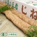 有機 贈答用 約1.2kg(1~3本) 有機JAS・自然農法 (熊本県 那須自然農園) 産地直送