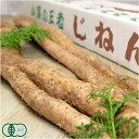 自然薯 家庭用 約1.2kg(1?5本)(熊本県 那須自然農園)有機JAS無農薬野菜・送料無料・産地
