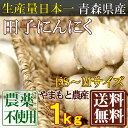 田子にんにく 玉A品 1kg (青森県 山本農産) 無農薬(自然農法登録申請中) 送料無料