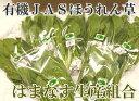 ほうれん草 20袋(約3kg)(青森県 はまなす生産組合)有機JAS無農薬野菜・送料無料・産地直送