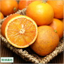 ブラッドオレンジ 訳あり 5kg (広島県 セーフティーフルーツ) 県特別栽培 農薬・化学肥料不使用 ノーワックス 送料無料 産地直送