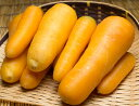 黄色人参 洗い B品10kg(千葉県 生産者連合デコポン)無農薬野菜・送料無料・産地直送