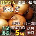 玉ねぎ(M〜Lサイズ) 5kg(北海道 はるか農園) 自然農法たまねぎ 無農薬 野菜 送料無料
