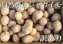 北あかり(セール) 小玉訳あり10kg(青森県 遠藤農園)自然農法無農薬芋・送料無料・産