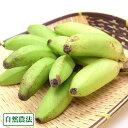 ミニバナナ 2kg 自然農法 (沖縄県 石垣島無農薬自然農場) 産地直送