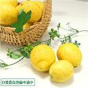 [クール便無料]広島(とびしま)レモン 規格外・加工用3kg(広島県 とびしま農園)農薬