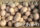 きたあかり(セール) A品 5kg(青森県 遠藤農園)自然農法無農薬じゃがいも・送料無料