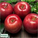 早生りんご(赤) A品3kg箱(9〜13玉) 特別栽培 (青森県 田村りんご農園) 産地直送