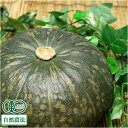 かぼちゃ 10kg(北海道自然の会) 有機JAS 自然農法 農薬不使用 産地直送 送料無料