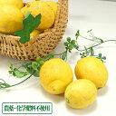 広島(とびしま)レモン 10kg 無選別 自然農法登録中 (広島県 とびしま農園)
