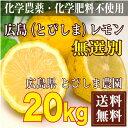 広島(とびしま)レモン 20kg 無選別 自然農法登録中 (広島県 とびしま農園)