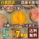 【訳あり・加工用】 丸ごと冷凍マンゴー 7kg 自然農法 (沖縄県 沖縄マンゴー生産研究会)