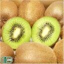 【訳あり】 キウイフルーツ 3kg S〜2Sサイズ 有機JAS (神奈川県 石綿敏久) 産地直送