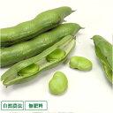 そら豆 4.5kg 自然農法 無肥料 (兵庫県 花岡農恵園) 産地直送