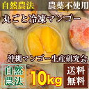 【訳あり・加工用】 丸ごと冷凍マンゴー 10kg 自然農法 (沖縄県 沖縄マンゴー生産研究会)