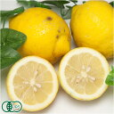 【A・B品混合】リスボンレモン 10kg 有機JAS (広島県 瀬戸内海の恵み普及会) 産地直送