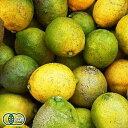 リスボンレモン 10kg 有機JAS (広島県 瀬戸内海の恵み普及会) 産地直送