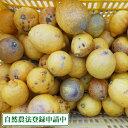 広島県産(とびしま)早生レモン 5kg 無選別 自然農法登録中 (広島県 とびしま農園)