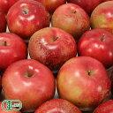【加工用】有機りんご(赤) 10kg箱 有機JAS (青森県 北上農園) 産地直送