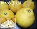 はやさき文旦 約8kg(12〜16玉)(静岡県三ヶ日町 外山農園) 特別栽培 低農薬柑橘 減農薬 送料無料 産地直送 ぶんたん