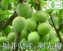 【予約商品】 剣先梅(梅酒用) 秀品 10kg 有機JAS (福井県 よしむら農園) 産地直送