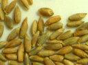 メール便送料無料 (宅配便不可・代引き決済不可・日時指定不可)●ライ麦 400g×2 化学合成農薬不使用