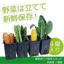 備長炭入り野菜スタンド菜鮮箱4個組[SSB4]/10P03Dec16