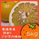 【送料無料】愛媛県産 訳ありプチ河内晩柑 5kg【smtb-KD】【smtb-kd】
