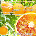タロッコオレンジ