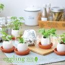 エッグリング 育てるたまご 花 ワイルドストロベリー バジル ミント イタリアンパセリ 栽培キッド ハーブ