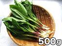 天然!北海道産!幻の山菜!《送料無料》北海道産 行者にんにく(アイヌネギ)【生冷蔵】500g