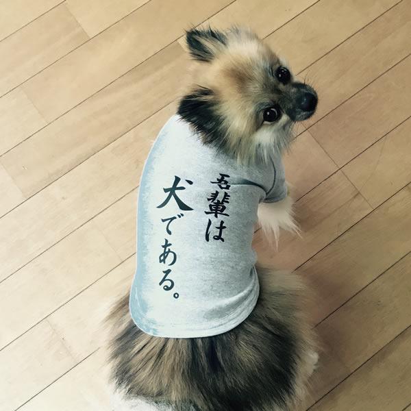 吾輩は犬である。Tシャツ日本製ドッグウェアペットウェア/小型犬用品/dogwear/いぬ用/ワンちゃ