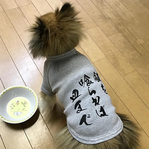 大迫半端ないって?愛犬のお名前入りtシャツ日本製ドッグウェアペットウェア/大型犬用品/dogwear