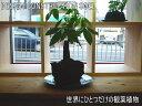 ★インテリアのプロが考えた「オリジナルミニガーデン」★幻の観葉植物★バキラ2★熱帯の溶岩と植物を組み合わせて