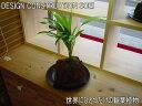 ★インテリアのプロが考えた「オリジナルミニガーデン」★幻の観葉植物★ヤシ2★熱帯の溶岩と植物を組み合わせて