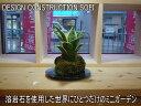 ★インテリアのプロが考えた「オリジナルミニガーデン」★幻の観葉植物★サンズぺリア★熱帯の溶岩と植物を組み合わせて
